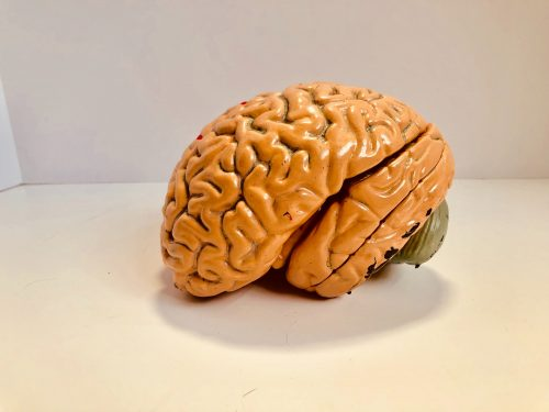 An orange, plastic, realistic model of the human brain placed upon a white surface